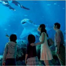Native App – S.E.A Aquarium