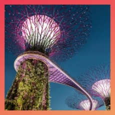 Native App – Gardens by the Bay