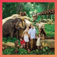 Native App – Singapore Zoo